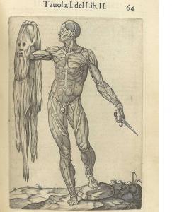 図9 Juan Valverde de Amusco, Historia de la composicion del cuerpo humano (Rome, 1560) より。