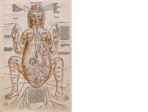 妊婦の解剖図の手彩色の版画。『医学選集』Fasciculus Medicinae (Venice, 1491) より